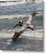 Pelican Soaring  Metal Print