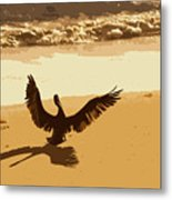 Pelican Spreads It's Wings Metal Print