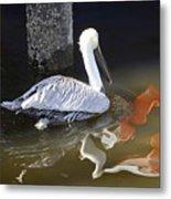 Pelican Swim Metal Print