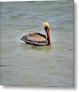 Pelican Swimming  Metal Print