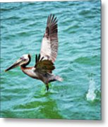 Pelican Taking Flight Metal Print