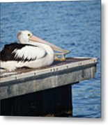 Pelican Taking Time Out 691 Metal Print