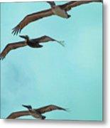 Pelican Trio Metal Print