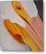 Pelican Twist Metal Print