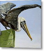 Pelican Wings Metal Print