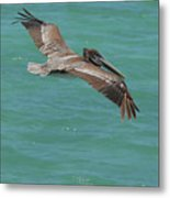 Pelican With His Wings Extended Over The Tropical Aruban Waters Metal Print