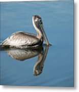 Pelican With Reflection Metal Print