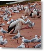 Pelicans At Pearl Beach 3.0 Metal Print