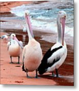 Pelicans At Pearl Beach 5.2 Metal Print