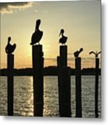 Pelicans At Sunset Metal Print