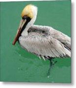 Pelican's Cove Metal Print