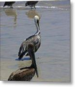 Pelicans Enjoying The Day At Playa Manzanillo Metal Print