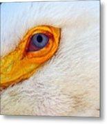 Pelican's Eye Metal Print