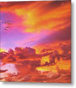Pelicans Flying Into Sunset  Metal Print