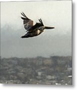 Pelicans Flying Over San Francisco Bay Metal Print
