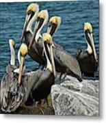 Pelicans Fort Pierce, Fl. Jetty Metal Print