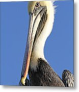 Pelican's Good Side Metal Print