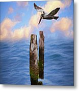 Pelicans On The Outer Banks Of North Carolina Ap Metal Print