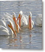 Pelicans On The Prowl Metal Print