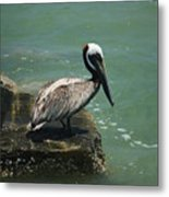 Pelican's Perch Metal Print