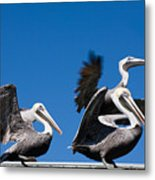 Pelicans Take Flight Metal Print