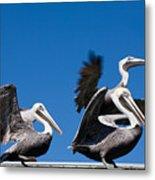 Pelicans Take Flight Metal Print