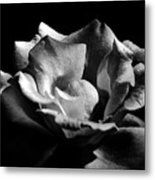 Penetrating The Rose Metal Print