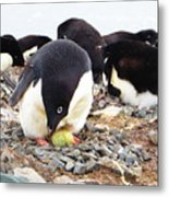 Penguin And Her Egg Metal Print