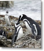 Penguin Love Metal Print