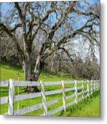 Penn Valley Tree Metal Print