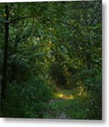 Pennsylvania Path Metal Print