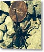 Penny Pinching Spider Metal Print