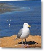 Pensive Seagull Metal Print