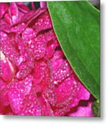 Peony And Leaf Metal Print