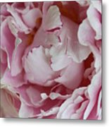 Peony Close Up Metal Print