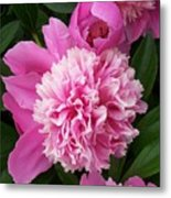 Peony With Ant Metal Print