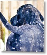 Pepper And The Snow Storm Metal Print
