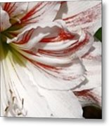 Peppermint Candy Metal Print