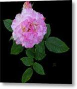 Peppermint Rose1 Cutout Metal Print