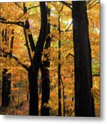 Pequaming Fall Metal Print