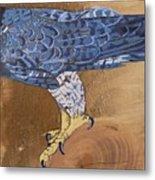 Peragrine Falcon Metal Print