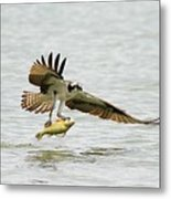 Perch On The Run 2 Metal Print