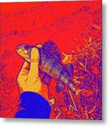 Perch Red Yellow Blue Metal Print