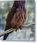 Perched - 1 Metal Print