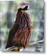 Perched - 2 Metal Print
