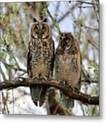 Perched And Posing Metal Print