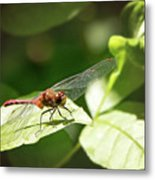 Perched Dragonfly Metal Print