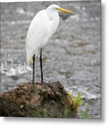 Perched Great Egret Metal Print
