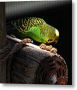 Perched Parakeet Metal Print