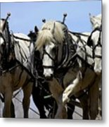 Percherons Metal Print